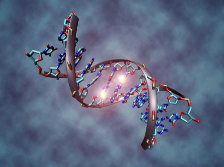 DNA - Photo by Christoph Bock
