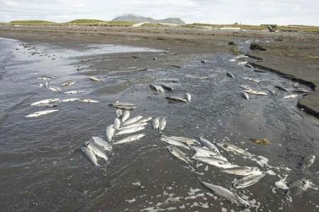 Fish Deaths