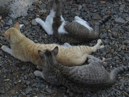 Stray Cats - Photo by Chandrika Nair