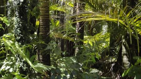 Amazon Rainforest - Public Domain