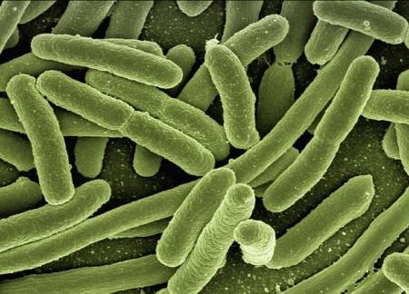 Bacteria - Public Domain
