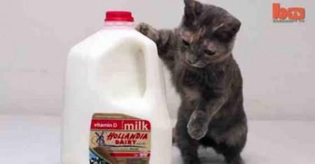Cute Cat - Facebook