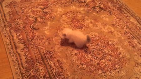 Kitten Afraid Of The Carpet - YouTube