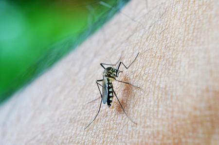 Malaria - Public Domain