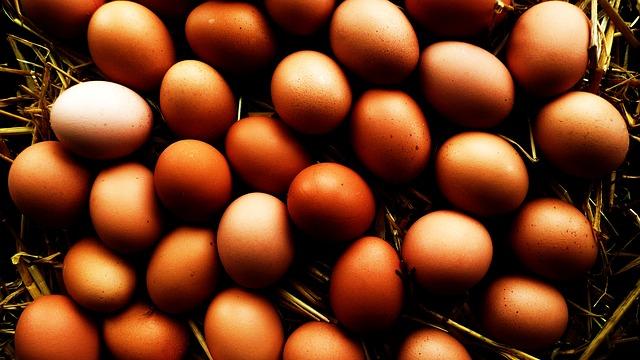 Organic Eggs - Public Domain