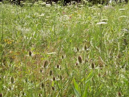 Weeds - Public Domain