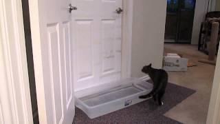Cat Opening Doors - YouTube