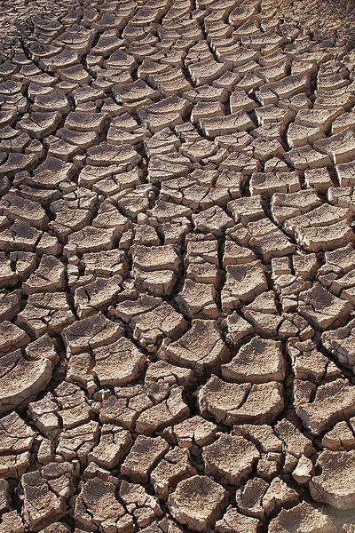 Drought - Photo Taken By Tomas Castelazo