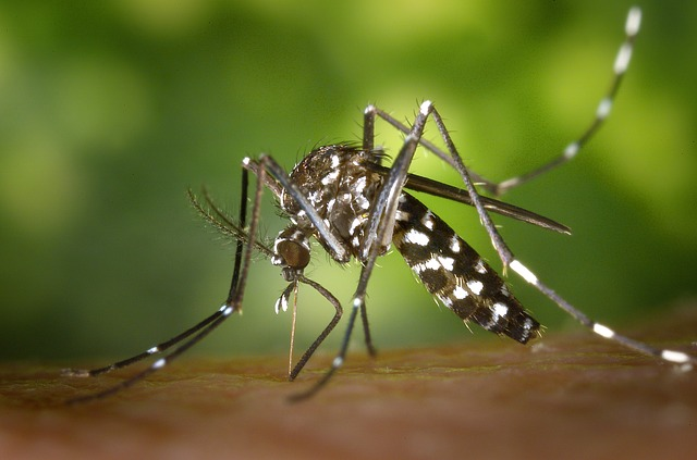 Dengue Fever - Public Domain