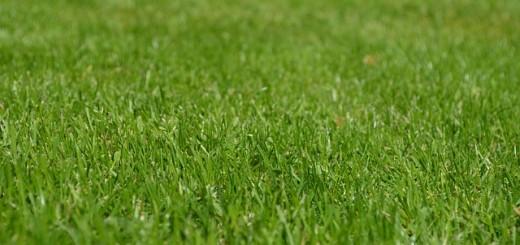 Lawn - Public Domain
