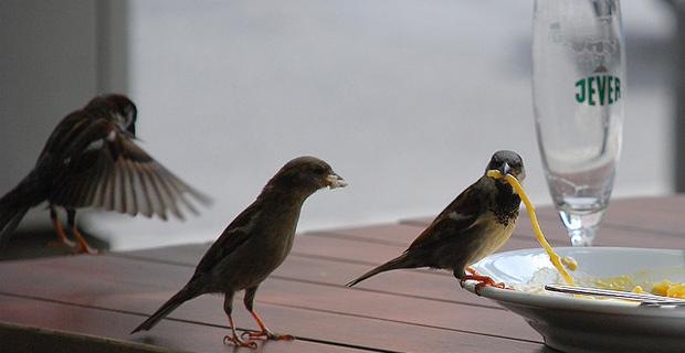 Birds by bogenfreund on Flickr
