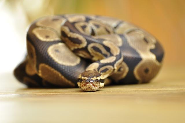 Python - Public Domain