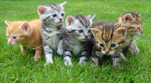 Kittens - Public Domain