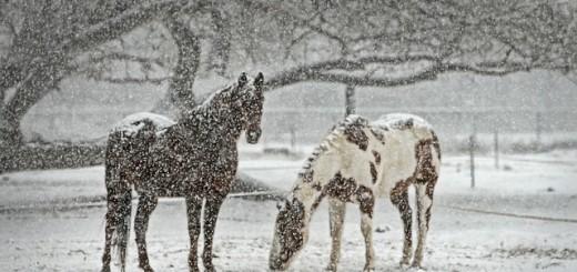 Snow - Public Domain