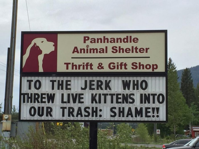 Billboard Response To Abandoned Kittens from Panhandle Animal Shelter