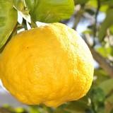 Lemon - Public Domain