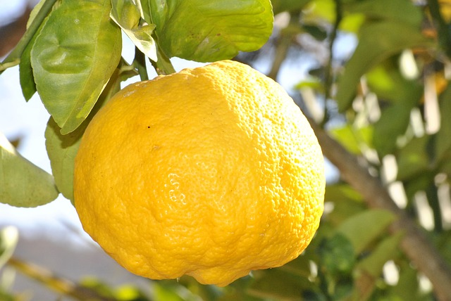 Lemon - Public Domain