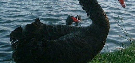 Black Swan - Great Recession Blog