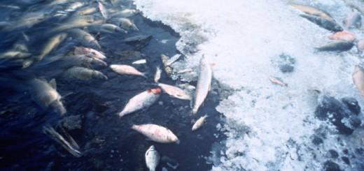 Fish Deaths - Public Domain