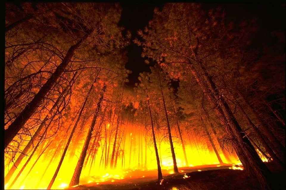 Wildfire In A Forest - Public Domain