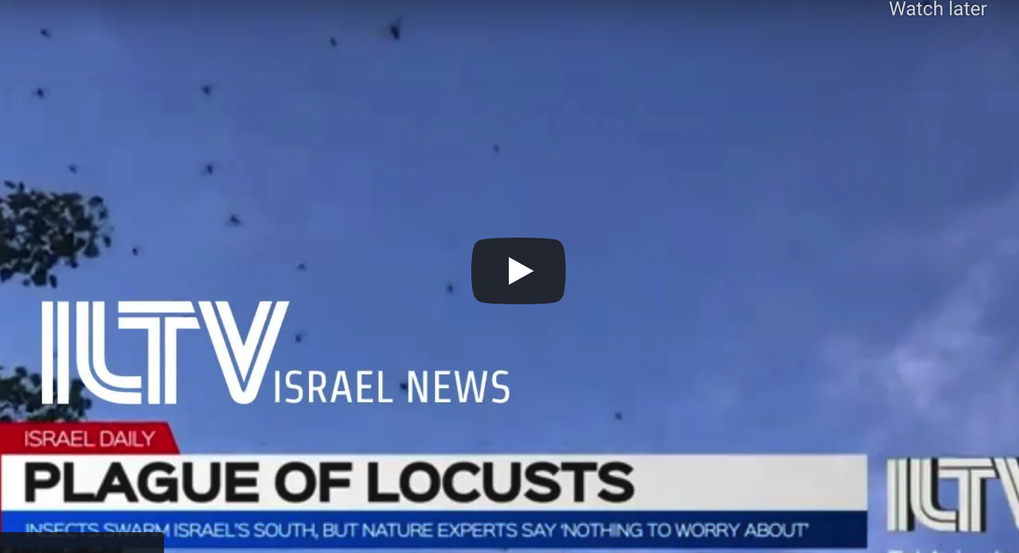 Israel Hit By A Plague Of Locusts